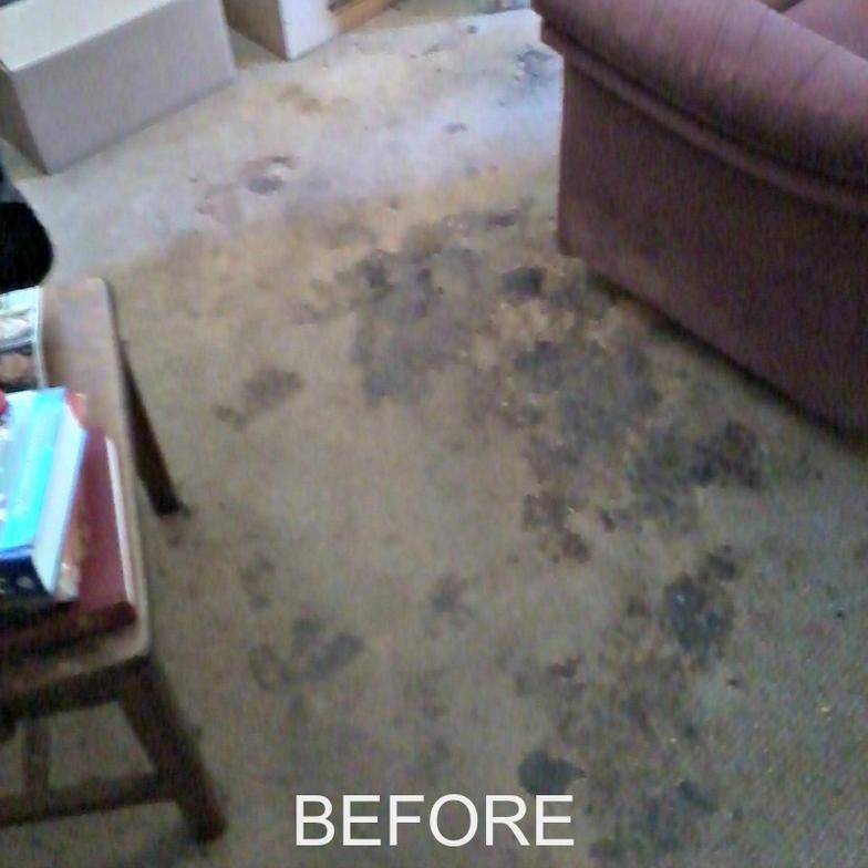 heavily soiled carpet cleaning carpet ideas. Black Bedroom Furniture Sets. Home Design Ideas